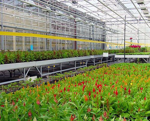 Celex - potplantenkas